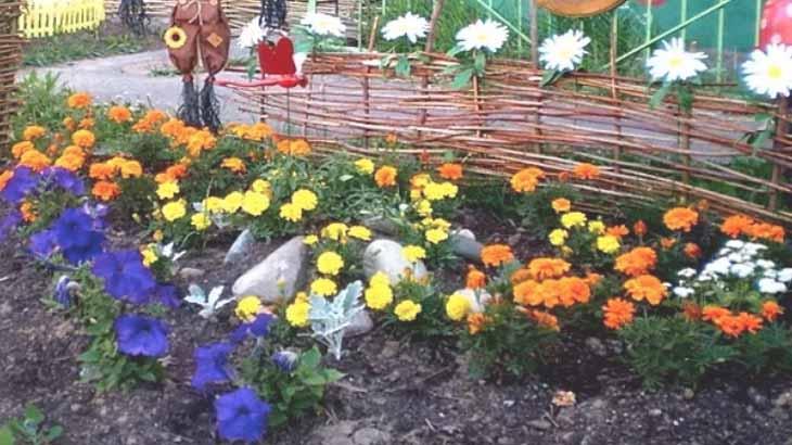 Клумба с яркими цветами