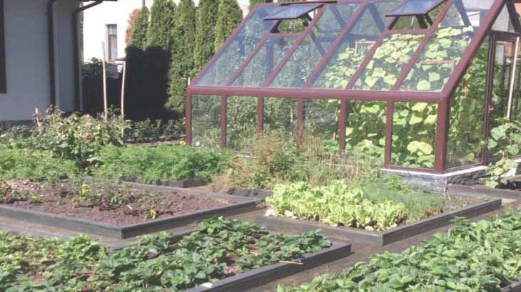 Огород с теплицей
