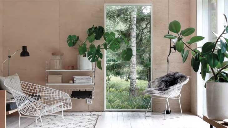 Растения и картина в квартире