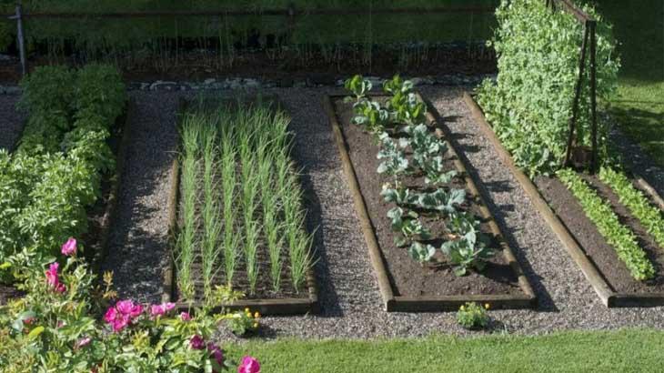 Красивые грядки в огороде